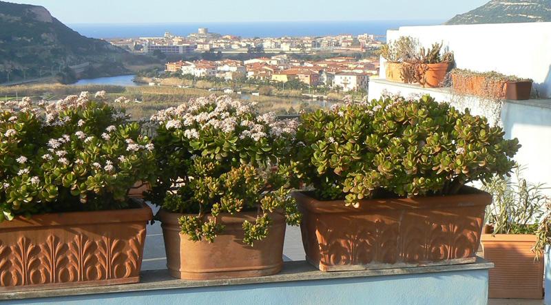 Bosa-veduta-da-una-terrazza.jpg